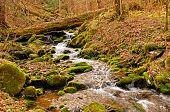 Um pequeno riacho na Primavera