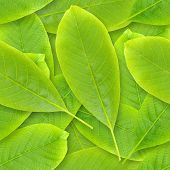 Nutwood leafs seamless background - background for continuous replicate. See more seamless backgroun