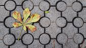 Dried Leaves Of Chestnut Tree Fallen On Ground Tiles With Geometric Circles Pattern. Colorful Autumn poster