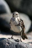 Bird, Galapagos