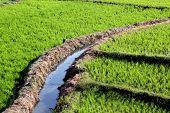 Rice Field Irrigation