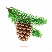 Realistic Pine Cone At Fir Tree Branch Or Strobilus At Pine-tree Twig. Spruce With Evergreen Seed Pa poster