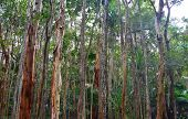 Evergreen Forest Trees Environment, Ecology Of Green Tree In Tropical Forest, Good Environment Conce poster