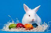 Glückliches Ostern Häschen und Ostereier