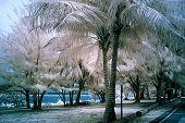 Infrared image of Guam public beach