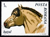 Postage stamp Romania 1970 Northern Moravian, Horse