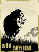 Wild Africa Image With Lion