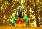 Photo of South Africa beautiful bird, big colorful macaw parrot in the forest, funny yellow parakeet