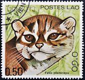 LAOS - CIRCA 1981: Um selo impresso em shows de Laos um Felis planiceps por volta de 1981