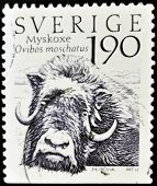 SWEDEN - CIRCA 1984: A stamp printed in sweden shows Musk Ox ovibos moschatus circa 1984