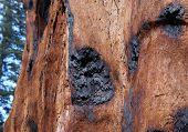 Bark Burn