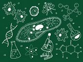 Biology sketches on school board.