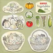 Hand-drawn collection basket with crop of vegetables and icons, vector illustration in vintage style