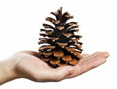Man holding a large pine cone in his hand.
