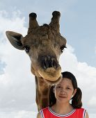 Giraffe With Girl