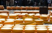 Cheese on the market