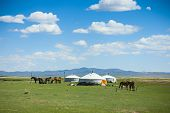 stock photo of nomads  - Yurts and horses in the steppe of Mongolia - JPG