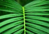 Green Palm Plant Leaves