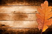 stock photo of dead plant  - Autumn oak leaves on the old wooden background - JPG