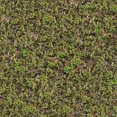 pic of steppes  - Seamless Texture of  Steppe with Green Grass and Dry Stems - JPG