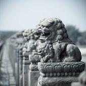 Vivid Stone Lion