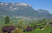 Caldaro or Kaltern,South Tyrol,Trentino,Italy