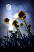 stock photo of moon-flower  - Beautiful night landscape of fantasy world with big dandelion flowers moon stars and magic lights - JPG