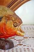 stock photo of piranha  - Detail of a red bellied piranha embalmed in a lounge - JPG