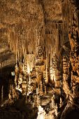 picture of stalagmite  - Stalactites and stalagmites in coves del Drach in Majorca with one of the largest subterranean salty lakes in the world - JPG