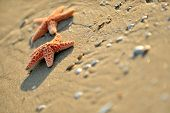 starfishes on wet sand