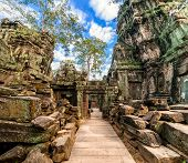 Ancient Khmer Architecture. Ta Prohm Temple With Giant Banyan Tree At Angkor Wat Complex, Siem Reap,