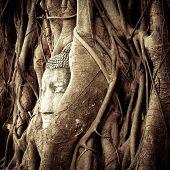 Buddha Head Hidden In The Tree Roots. Ancient Sandstone Sculpture At Wat Mahathat. Ayutthaya, Thaila