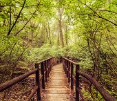 Jungle Landscape In Vintage Style. Wooden Bridge At Tropical Rain Forest. Doi Inthanon Park, Thailan