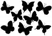 Flying butterflies vector illustration