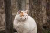 White rural tomcat