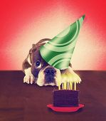 stock photo of ear candle  - a basset hound with long flapping ears - JPG