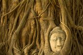 Buddha in roots of the tree in Ayutthaya, Thailand.