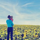 picture of heliotrope  - Rear view of a woman holding her child with love and care while looking at a wide sunflower field under a serene blue sky of summer - JPG