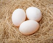 Organic Duck Eggs