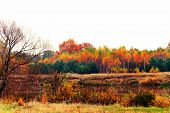 picture of paysage  - autumn  colorful beautiful paysage on the river bank
