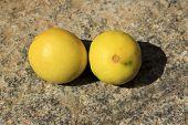 Twosome Ripe Lemons