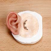 Clip Closure Artificial Human Ear