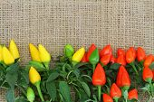 Hot red and yellow chili peppers on jute surface with copy space