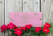 Flower border of red roses by rustic pink sign hanging on fence