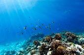 Beautiful colorful coral reef and tropical fish underwater at Maldives