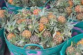 The Pineapple Sold In The Market.