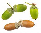 set of acorns isolated on white background
