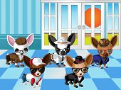 Chihuahua Dogs with Dress up 1