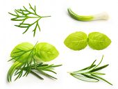 Basil leaves, dill, rosemary spice, onion isolated on white background.