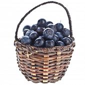 blueberries in wicker basket close up isolated on white